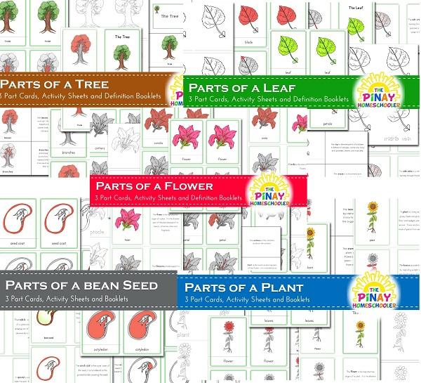 Botany Unit Bundle Pack