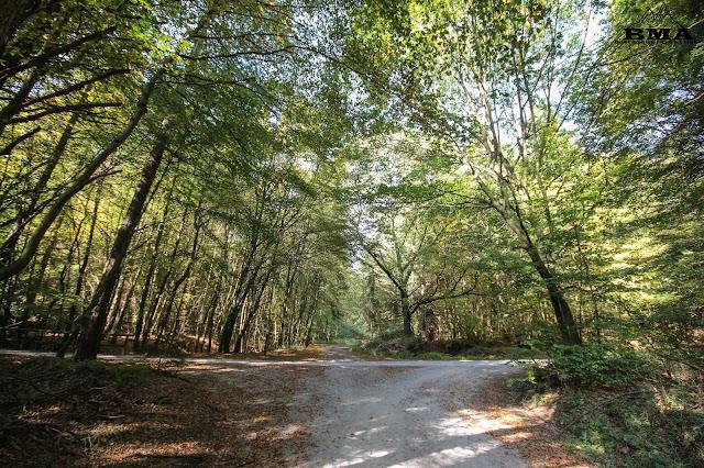 westerwaldsteig wandern westerwald - Köppel montabaur - wandern bma - Tourenbericht montabaur - outdoor blog