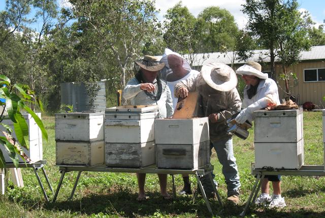 Μελισσοκόμος έκλεβε συνέχεια μελισσοκομικό εξοπλισμό χωρίς να τον καταλάβει κανείς: Σοκ προκαλεί η υπόθεση...