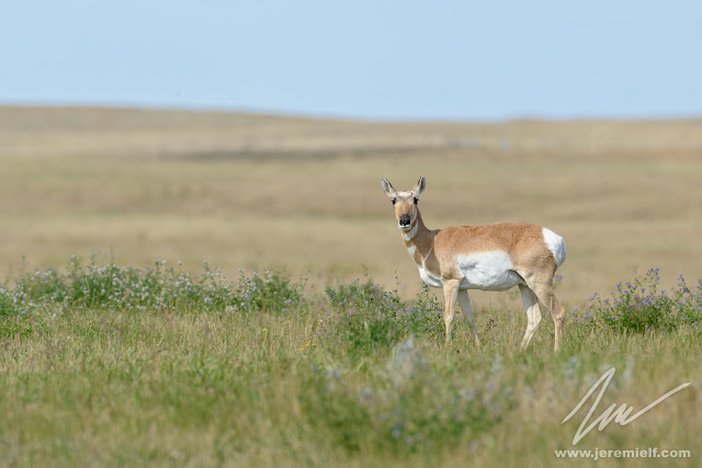 jeremie leblond fontaine photographe nature voyage quebec canada paysages landscapes wildlife faune sauvage