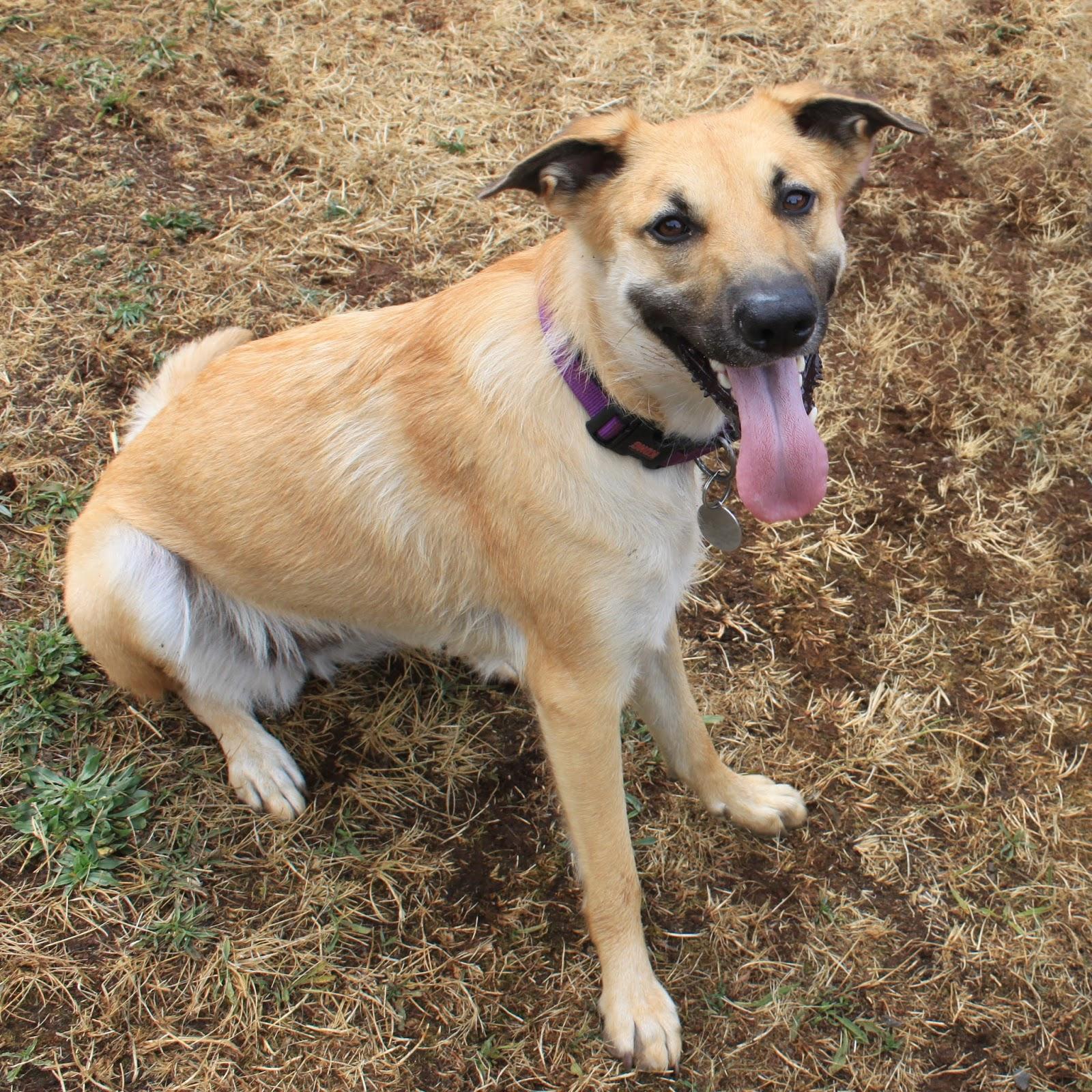 Chinook Dog Rescue