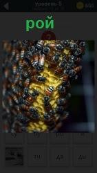 800 слов большой рой пчел 5 уровень