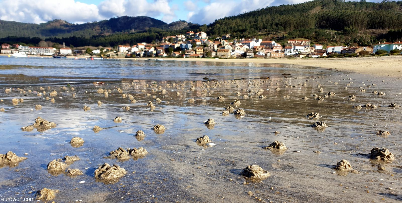 Playa llena de pequeños montoncitos de arena