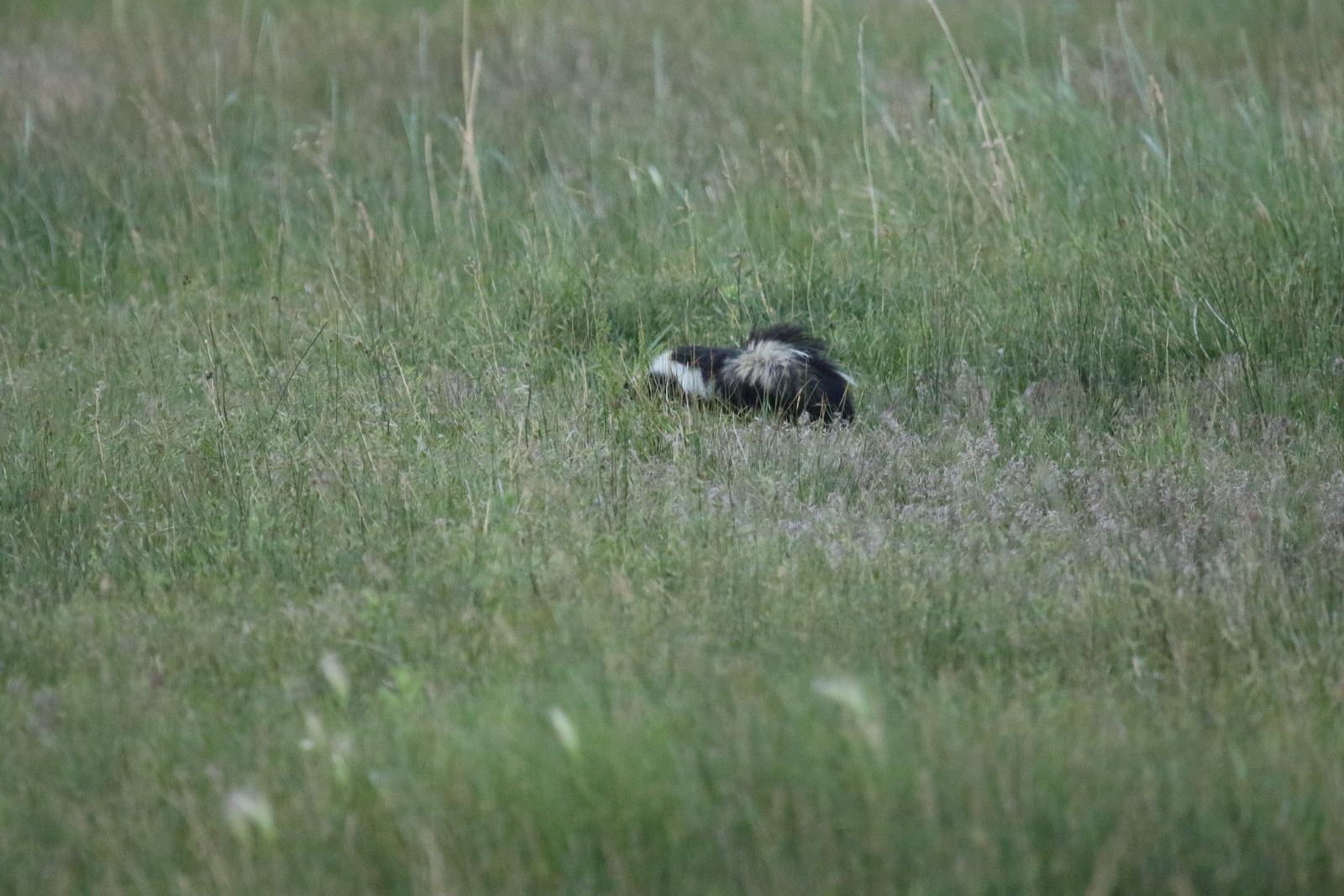 desert survivor chicken update skunks eggs and a new dog