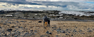 Playa Ytri Tunga, Península de Snaefellsnes (Snæfellsnes). Islandia, Iceland.