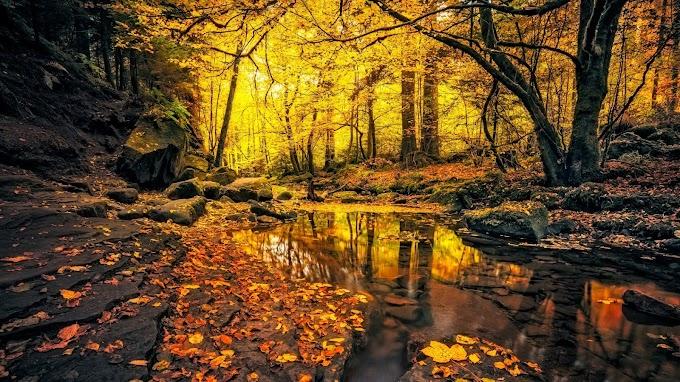 Paisagem Natural Outono na Floresta