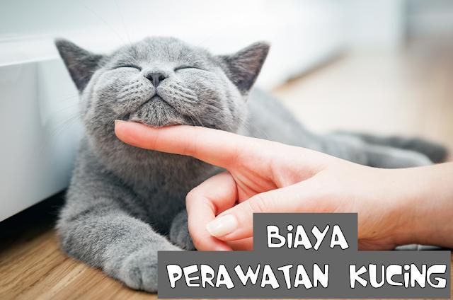 Biaya Merawat Kucing Persia