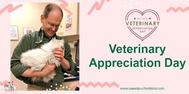 vet holding persian cat
