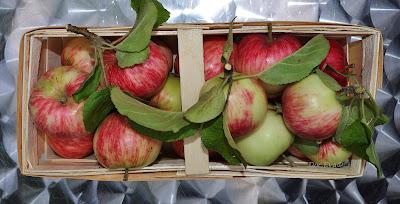 Apfel (Malus) Sorte Langsüßer oder Pommerscher