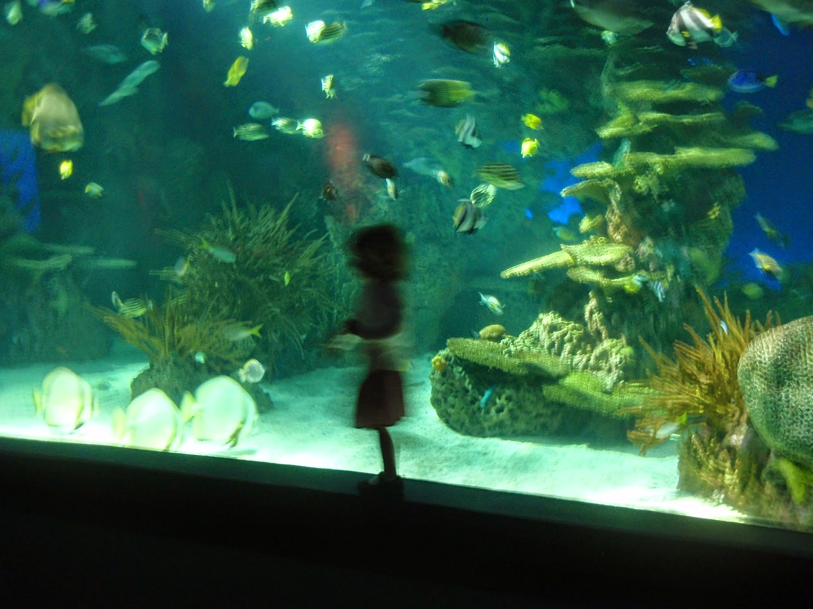 Blurry aquarium picture, field trip during ocean theme week preschool