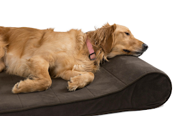 Things You Should Know About Addison's Disease in Dogs