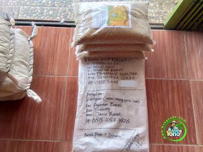 Benih pesana MARIANI HARTATI Pematang Siantar, Sumut..  (Sebelum Packing)