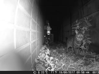 「トレイルカメラによる静止画撮影画像 ネコ 夜間」の写真