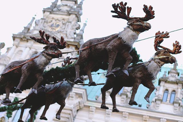 Reindeer Hamburg Christmas Market