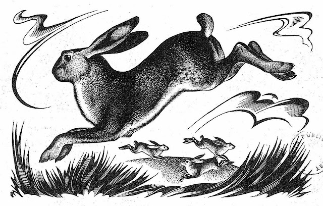 an Agnes Miller Parker wood cut illustration of wild hares or rabbits leaping in a natural field