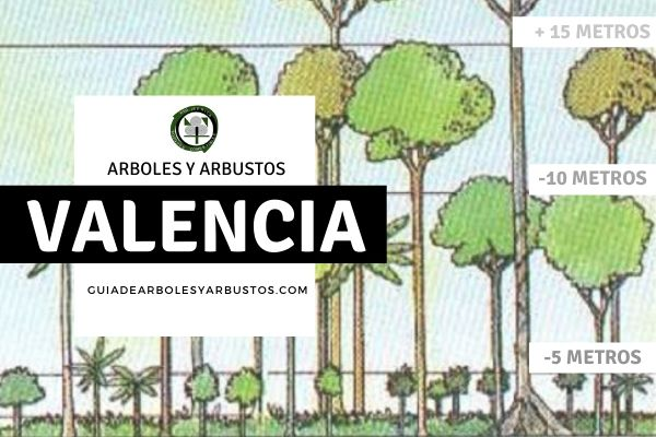 Arboles y arbustos de la provincia de Valencia, España, por estratos