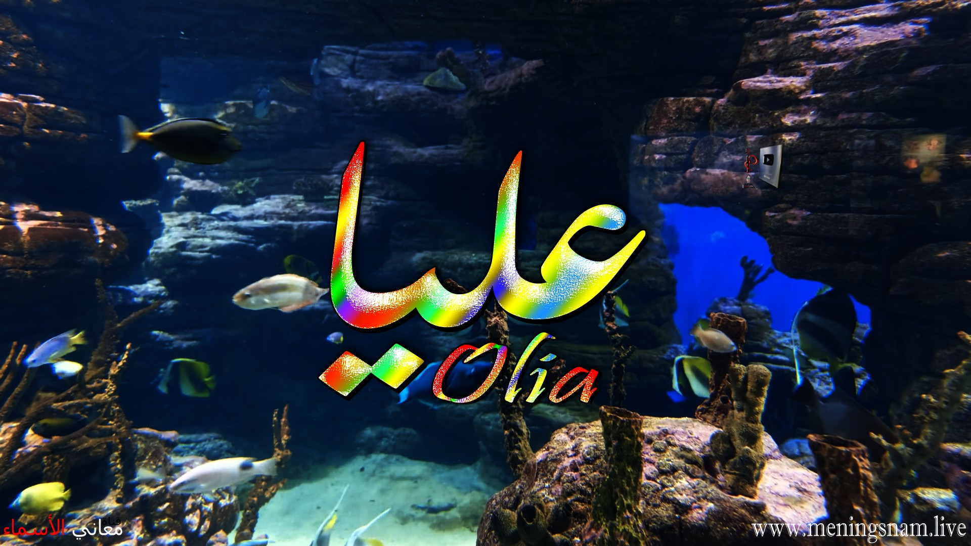 معنى اسم عليا وصفات حاملة هذا الاسم Olia