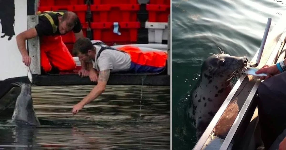 Beautiful Video Shows Fisherman's Friendship With Blind Seal That The Two Have Maintained For Over 10-Years