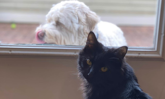 My cat and dog at the window