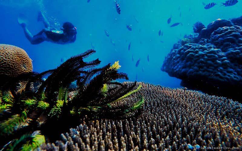 Snorkeling Harapan Island Underwater