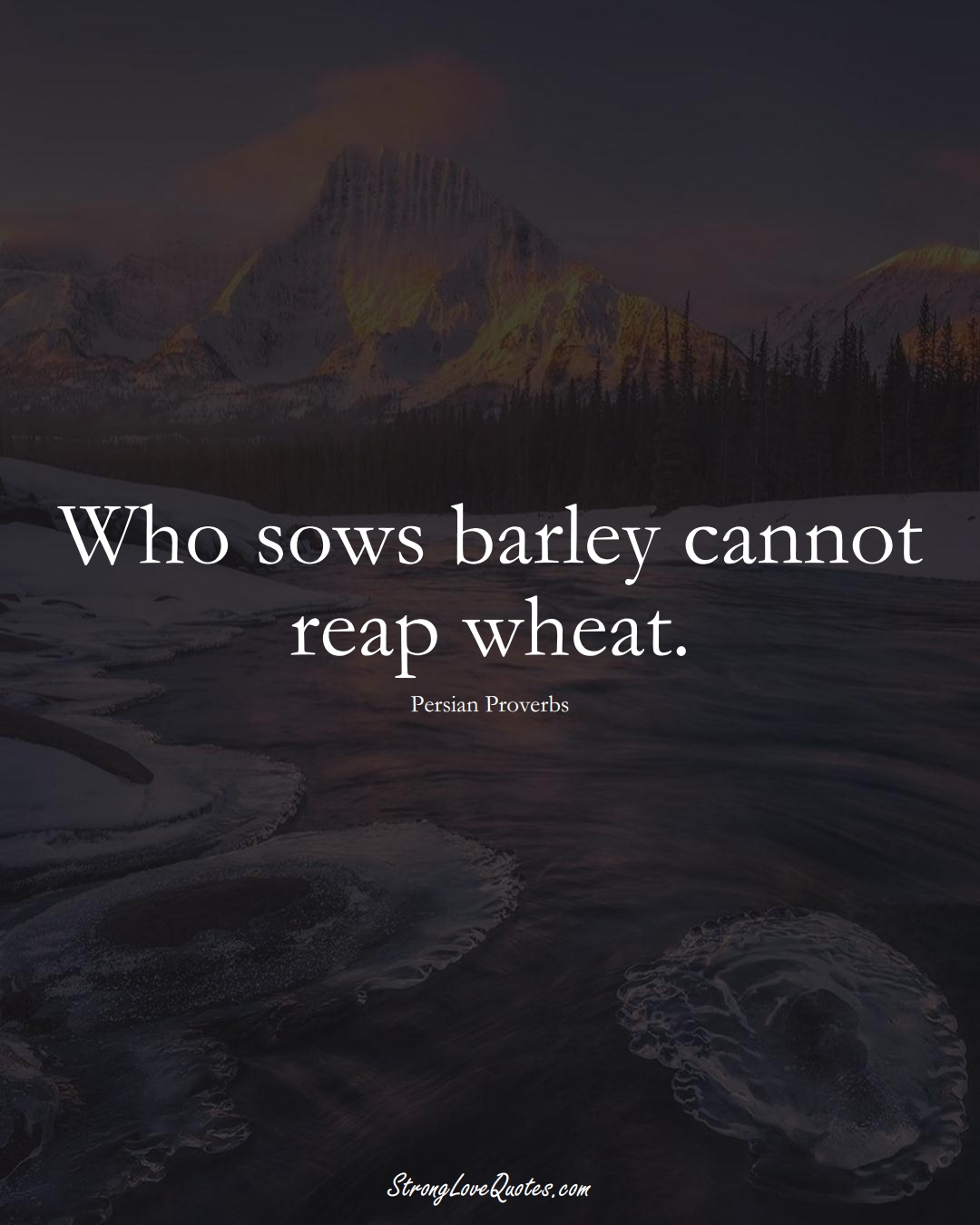 Who sows barley cannot reap wheat. (Persian Sayings);  #aVarietyofCulturesSayings