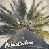 Palma Chilena 🌴🇨🇱