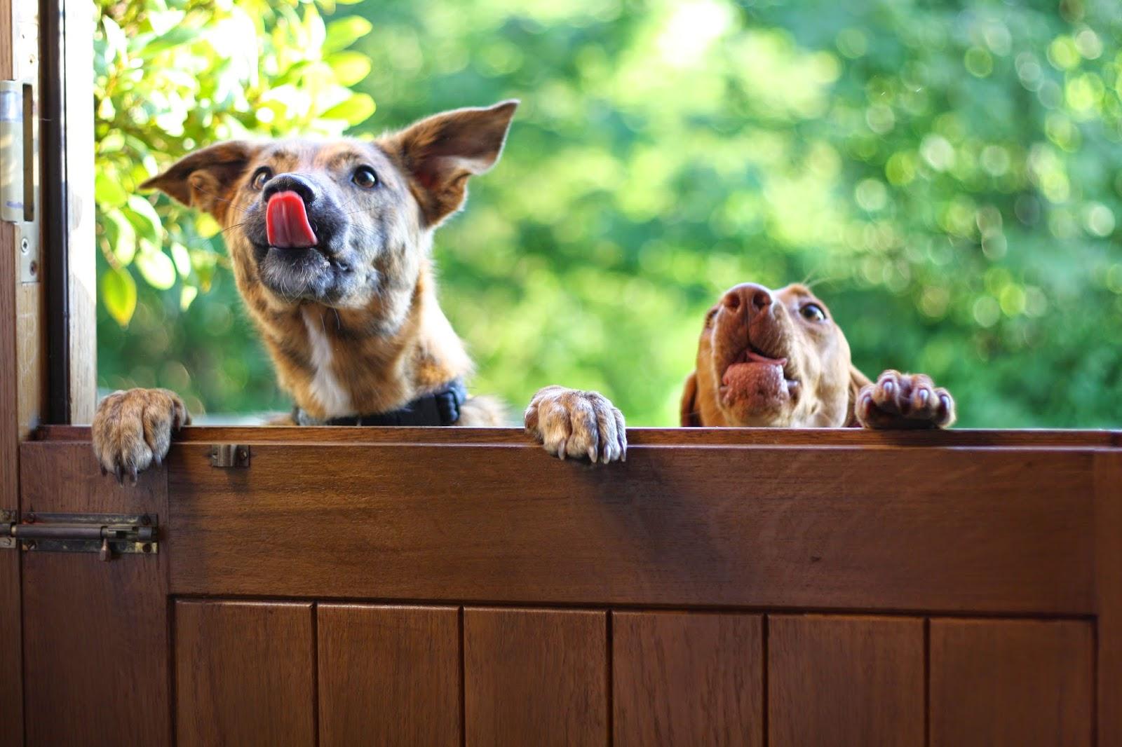 Image Result For Dog Treat