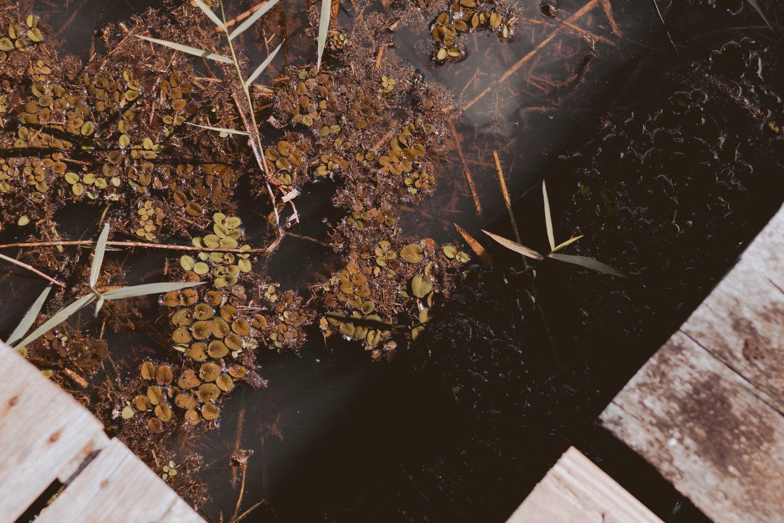 algas perto do palanque de madeira