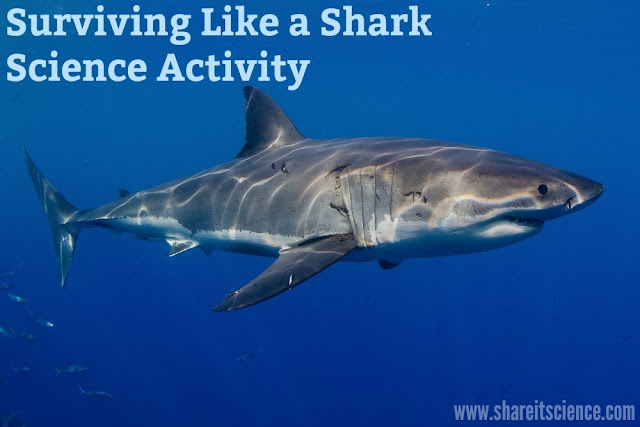 Shark Science Food Chain Energy Activity