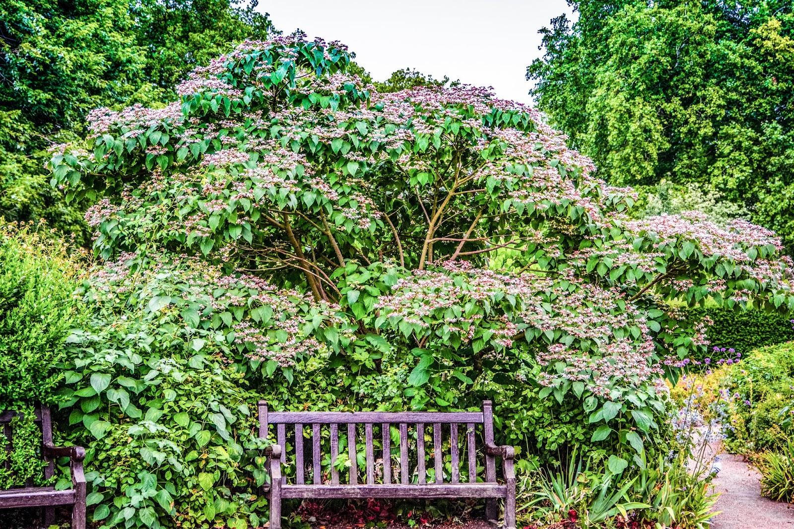 Queen's Rose Garden