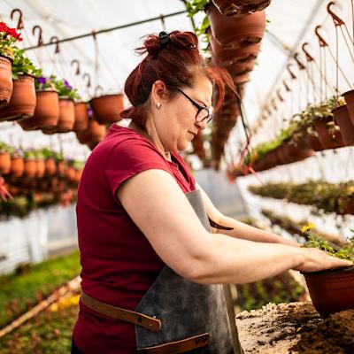 transplanting of plant stock