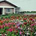 Abertas as inscrições para a segunda edição do Concurso de Jardins de Blumenau