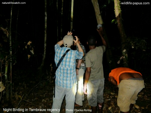 Watching nocturnal birds in Tambrauw forest with some American visitors and local people