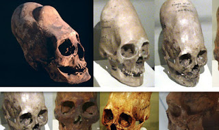 Examples of other skulls found on Earth