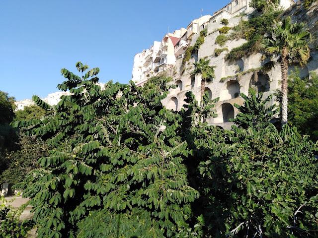 Annona cherimola a Tropea
