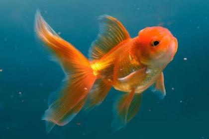 Semua Postingan Top Ikan