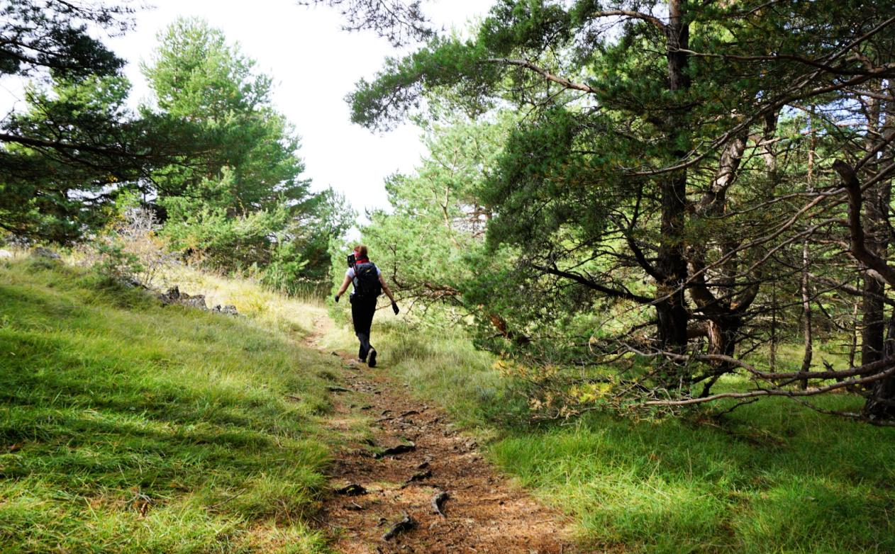 Pleasant trail near Colle de Rougiès