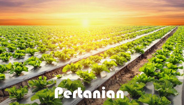 Pertanian di desa
