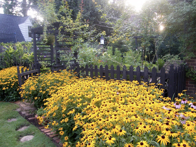 Border of Goldsturm rudbeckia flanks a short gate into kitchen garden.