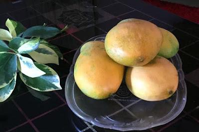 Health Benefits of Mangoes Weight Loss, Boost Immunity,