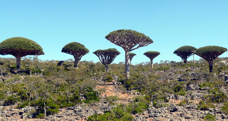 Socotra Island - The most alien-looking place on Earth