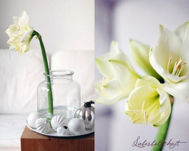 Liebesbotschaft Exotische Schnheiten  BlumendekoTipps
