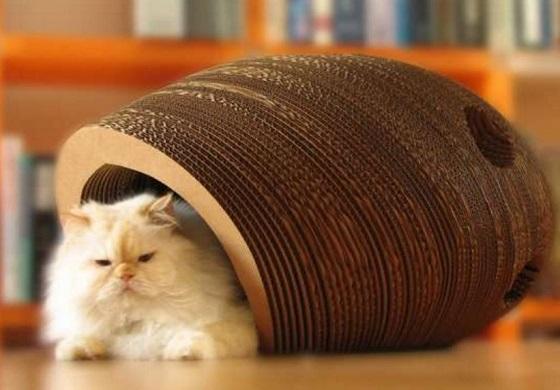 carton et chat 8