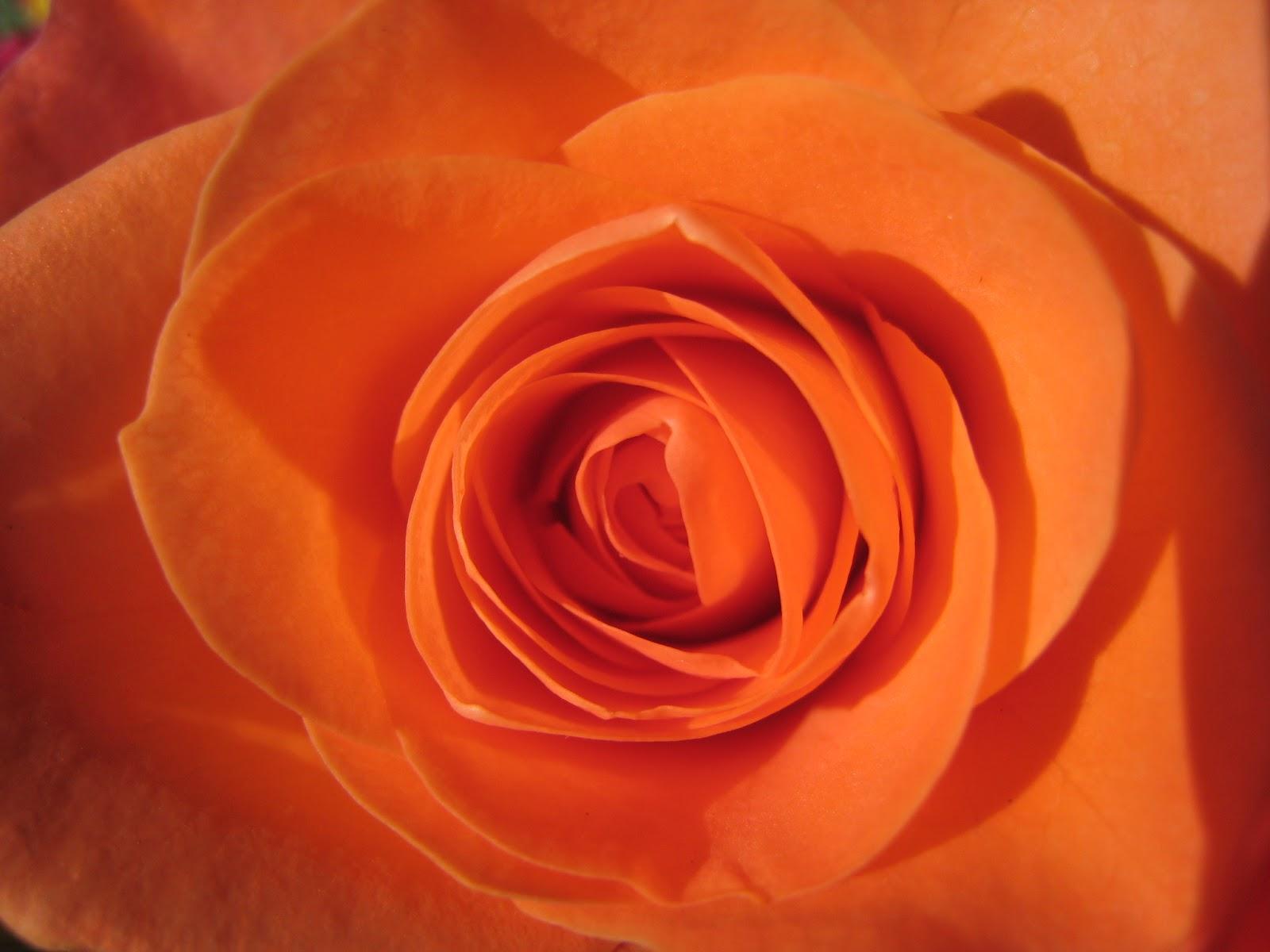 Meine Welt Die Farbe Orange