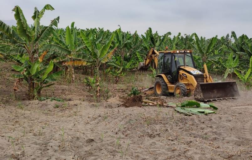 Área intangible había sido invadida para actividades agrícolas ilegales