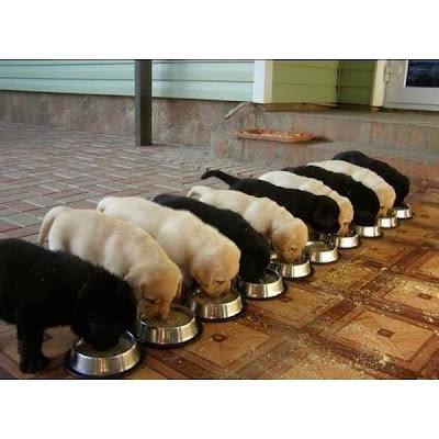Cachorritos comiendo