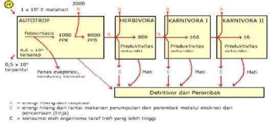 Gambar Skema aliran energi dalam ekosistem, Sumber: noet1961.wordpress.com