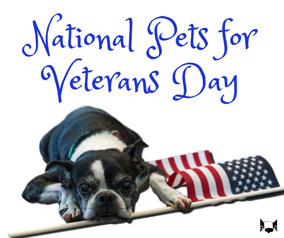 National Pets for Veterans Day Wishes Images download
