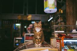 Ingin Membuka Usaha Pet Shop? Simak Langkah Mudah Memulainya!