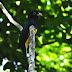 Observadores de aves do Tocantins observam as aves tocantinenses durante Big Day Brasil Primavera